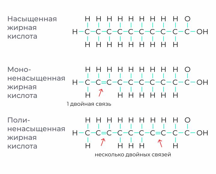 Примерная структура насыщенных, мононенасыщенных и полиненасыщенных жирных кислот и чем они отличаются